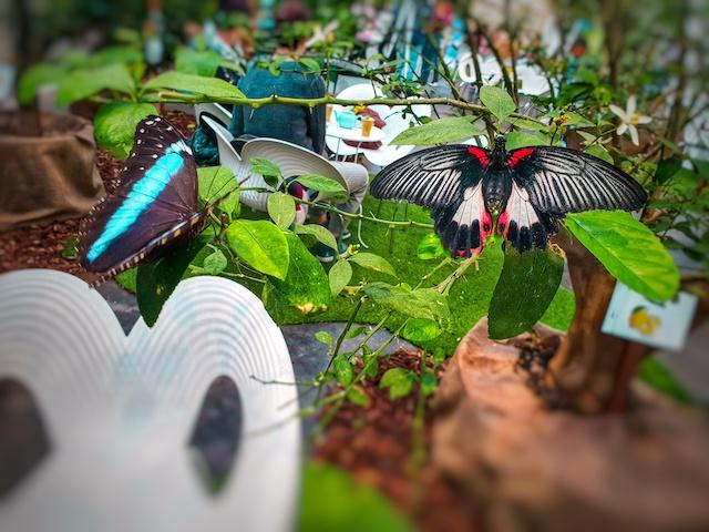 Te con le farfalle Bologna Fico Different Details