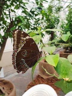 Bologna Te con le farfalle Fico Different details