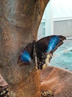 Fico te con le farfalle Roberta Arcangeli