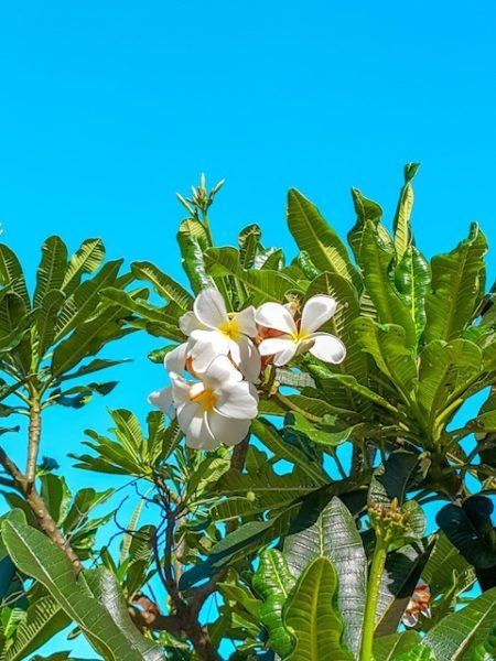 Frangipane Zanzibar Casadamare Jambiani Roberta Arcangeli