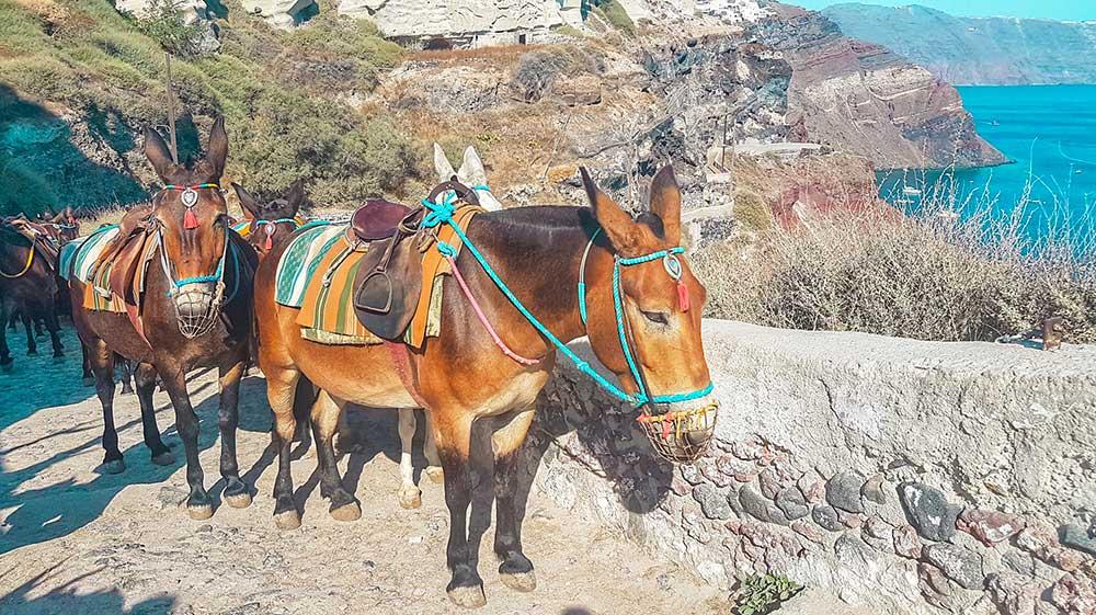 Santorini cosa vedere Oia Caldera somarelli Roberta Arcangeli
